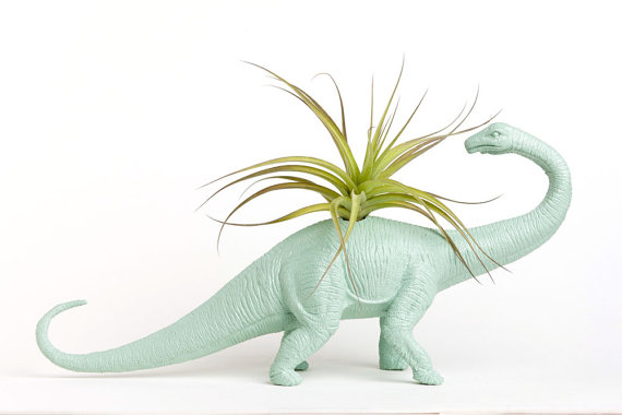 Dinosaur Planter with Air Plant