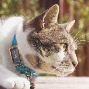 Snow Gadgets likewise Navigation And Gps Personal Navigation Devices also Gps together with Gps Pet Tracker Review also Easyisbetter wordpress. on g paws gps tracker