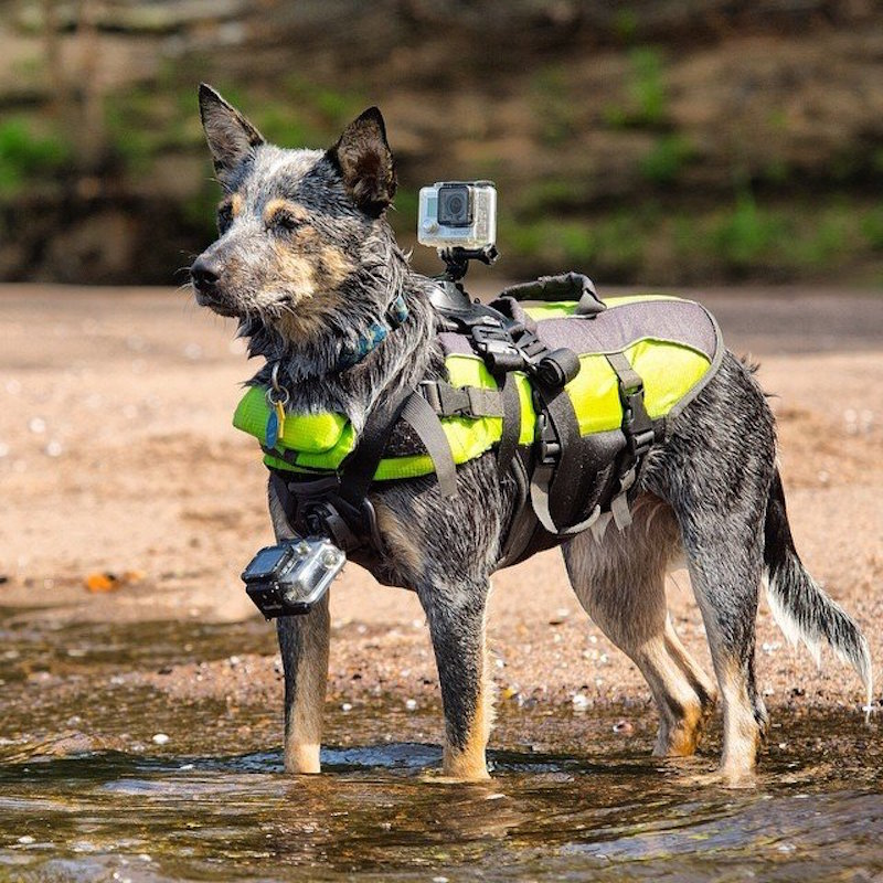 GoPro-Fetch-Dog-Harness-001